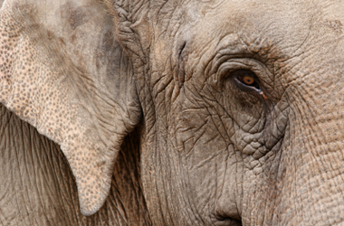Credentialled Diabetes Educators – The Primary Care Elephant in the Room