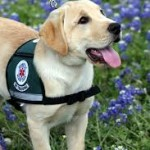 2018 image Diabetic Alert Dog